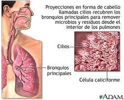 cilios