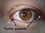 Tercer_p_rpado