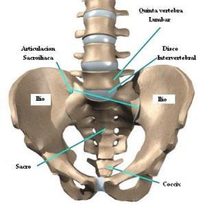 sacroiliacas_anatomia