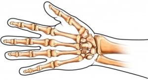 huesos de lamano