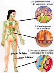 linfático