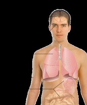 496px-Symptoms_of_AIDS-es.svg
