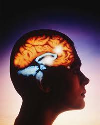 proteina cerebral